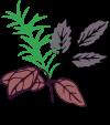 Logo Verde Succhi.PNG